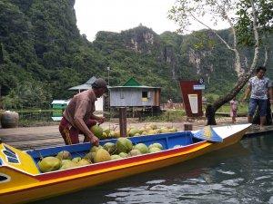 rammang-rammang kelapa